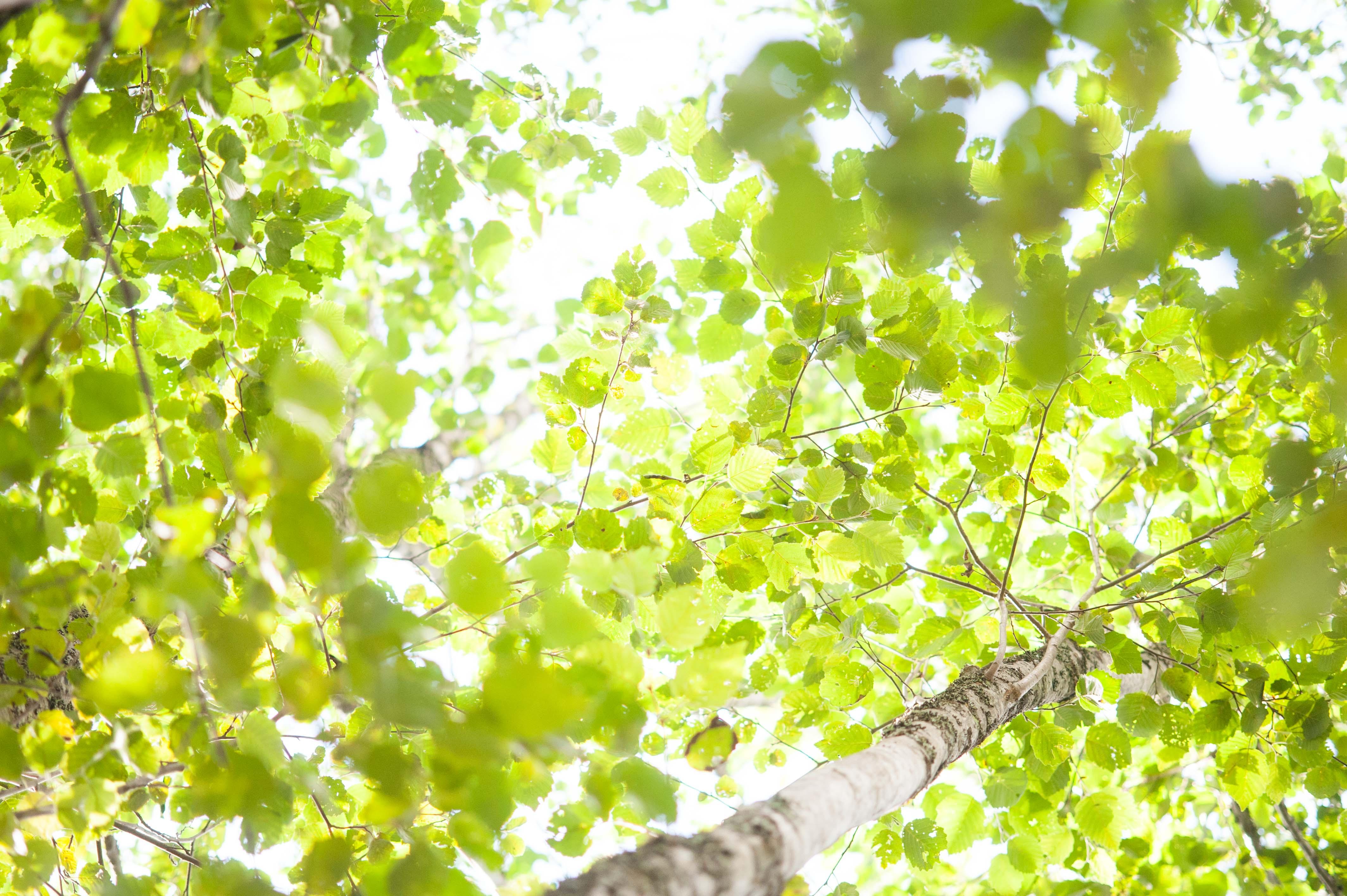 skog__2