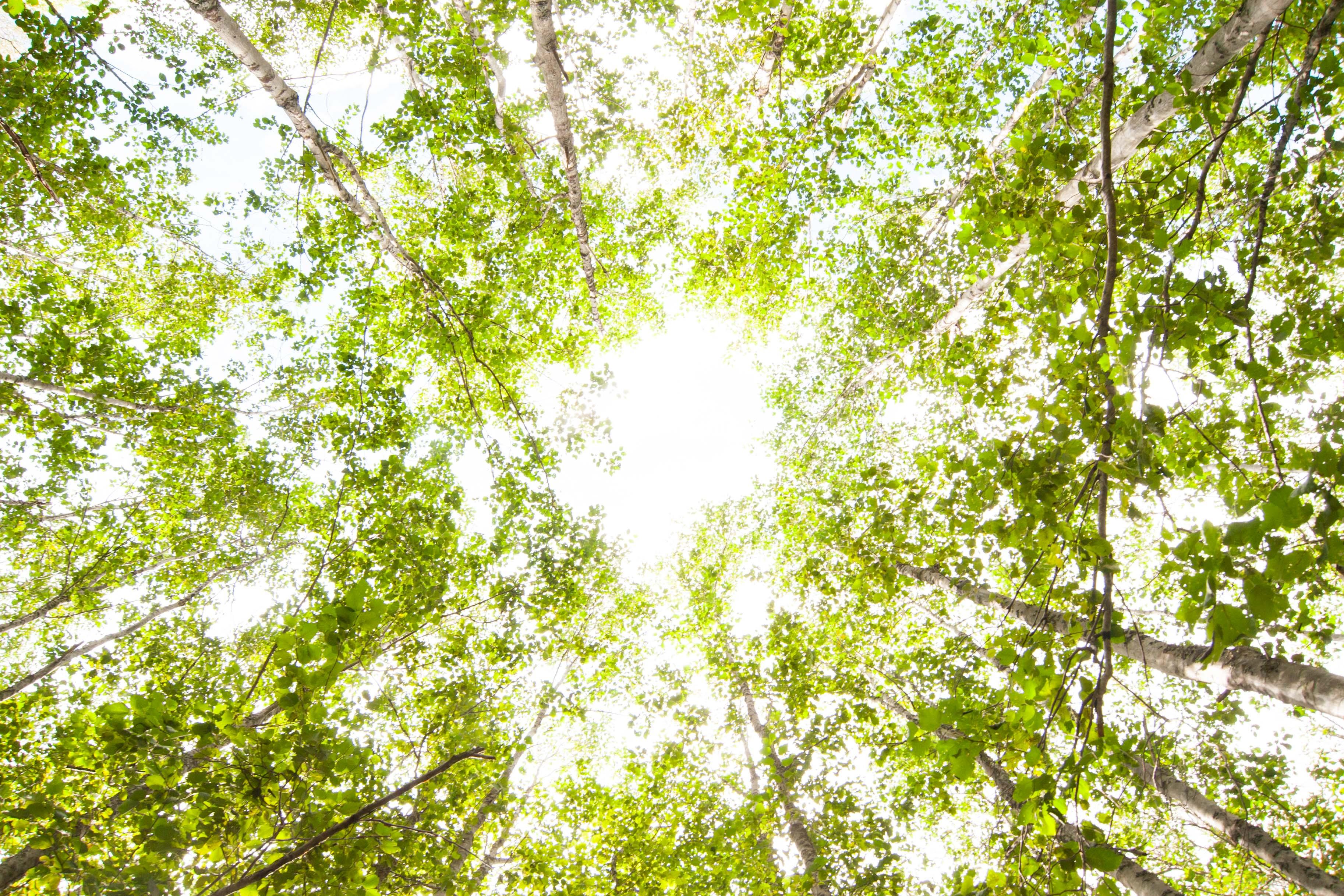 skog__3